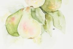 084 - Gezonde peren
