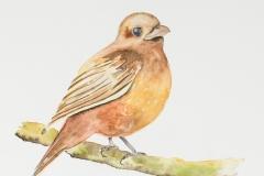 070 - Vriendelijke vogel
