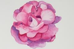 028 - ... Die Rose