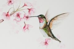 073 - Kolibri