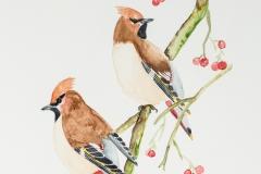 082 - Pestvogels