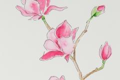 037 - Magnolia