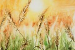 066 - Gouden oogst