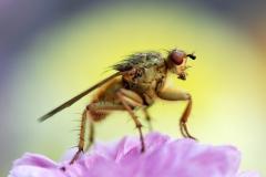 Sluipwesp, Ichneumonidae