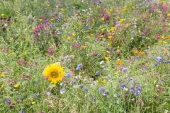 Bloemenplantsoen