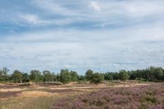 Heide bij Wolfheze