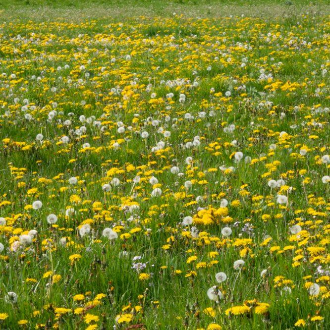 Alle bloemen in het veld (Bløf)